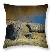 I Am Gator, No. 60 Throw Pillow