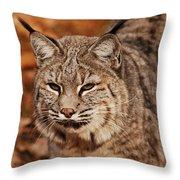 I Am One Good Looking Bobcat Throw Pillow