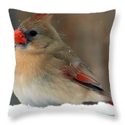 I Just Can't Resist The Beauty Of A Cardinal In The Snow Throw Pillow