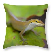 Lloyd's Lookin' At You Throw Pillow