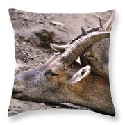 Ibex Mother And Son Throw Pillow