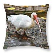 Ibis At Corkscrew Swamp Throw Pillow