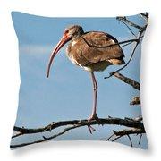 Ibis At  Rest Throw Pillow