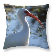 Ibis Blanco Throw Pillow