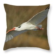 Ibis Glide Throw Pillow