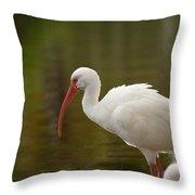 White Ibis Portrait Throw Pillow