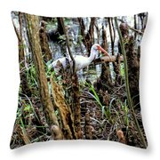 Ibis In The Swamp Throw Pillow