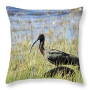 Ibis Looking Around Throw Pillow