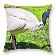 Ibis Looking For Food Throw Pillow