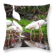Ibis Reflections Throw Pillow