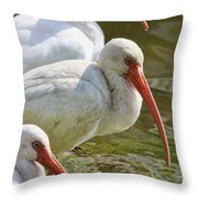 Ibis Three Throw Pillow