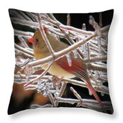 Ice Cage - Female Cardinal Throw Pillow