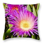 Ice Plant Blossom Throw Pillow