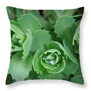 Ice Plant  Throw Pillow