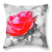 Iced Rose Throw Pillow