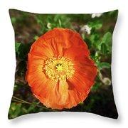 Iceland Poppy Throw Pillow