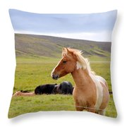 Icelandic Horse Throw Pillow