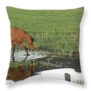 Idaho Farm Horse 2 Throw Pillow