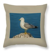 Idaho Sea Gull Throw Pillow