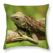Iguana Throw Pillow