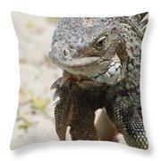 Iguana On A White Sand Beach Up Close Throw Pillow