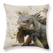 Iguana Sitting On A Sandy Beach In Aruba Throw Pillow