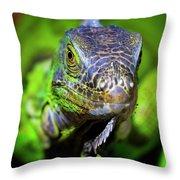 Iguana Stare Throw Pillow