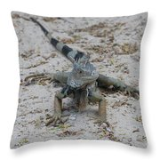 Iguana With A Striped Tail On A Sand Beach Throw Pillow