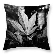 Illuminated Leaf, Black And White Throw Pillow