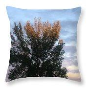 Illuminated Tree Top Throw Pillow