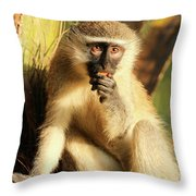 Illuminated Vervet Monkey  Throw Pillow