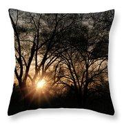 Illuminating Through Trees  Throw Pillow