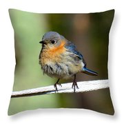 Illusive Female Bluebird Throw Pillow
