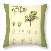 Illustrations Of The Flowering Plants And Ferns Of The Falkland Throw Pillow