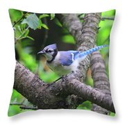 I'm Looking - Blue Jay Throw Pillow