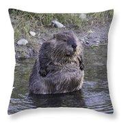 Im Not Fat Im Fluffy Throw Pillow
