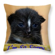 I'm So Sorry Greeting Card Throw Pillow