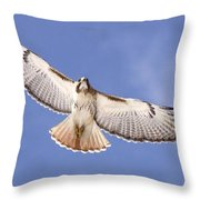 Img-0001 - Red-tailed Hawk Throw Pillow