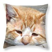 Img_0001 Cat Throw Pillow
