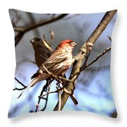 Img_0001 - House Finch Throw Pillow