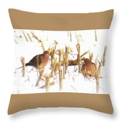 Img_0001 - Mourning Dove Throw Pillow