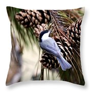 Img_0215-022 - Carolina Chickadee Throw Pillow