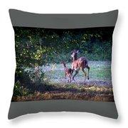 Img_0461-020 - White-tail Deer Throw Pillow