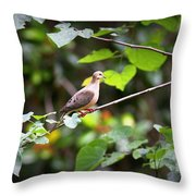 Img_0534-001 - Mourning Dove Throw Pillow