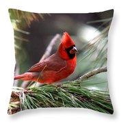 Img_0565-004 - Northern Cardinal Throw Pillow