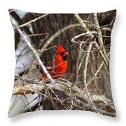 Img_0806 - Northern Cardinal Throw Pillow