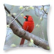 Img_0999-001 - Northern Cardinal Throw Pillow