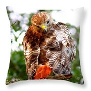 Img_1050-002 - Red-tailed Hawk Throw Pillow