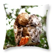 Img_1049-006 - Red-tailed Hawk Throw Pillow