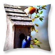 Img_1154 - Eastern Bluebird Throw Pillow